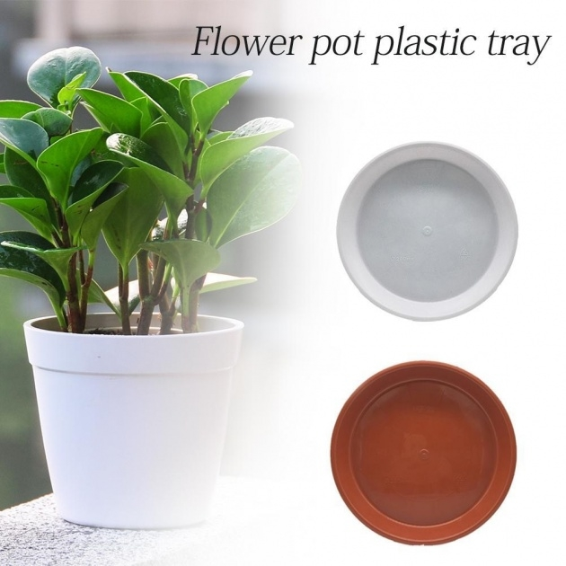 Awesome Plant Saucers Photo