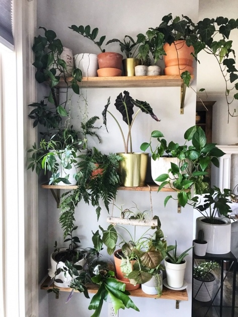 Awesome Plants For Small Spaces Picture