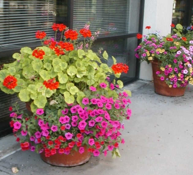 Awesome Potted Flowering Plants Photo