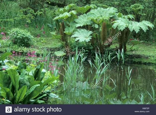 Awesome Primula Bog Garden Picture