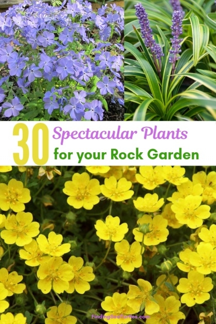 Awesome Rock Garden Plants Image