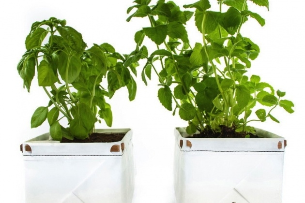 Awesome Self Watering Herb Planter Photo