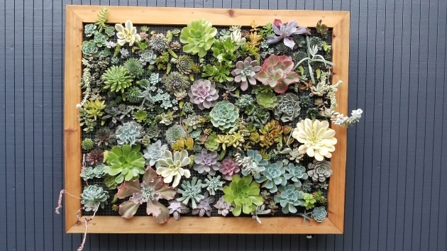 Awesome Succulent Wall Planter Photo