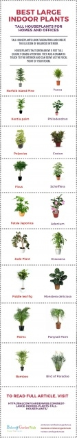 Awesome Tall Indoor House Plants Trees Photo