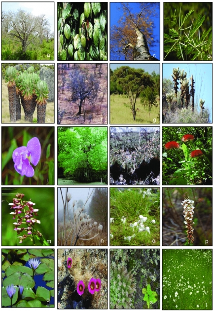 Awesome Tropical Types Of Plants Image