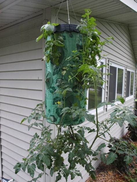 Awesome Upside Down Tomato Planter Diy Picture