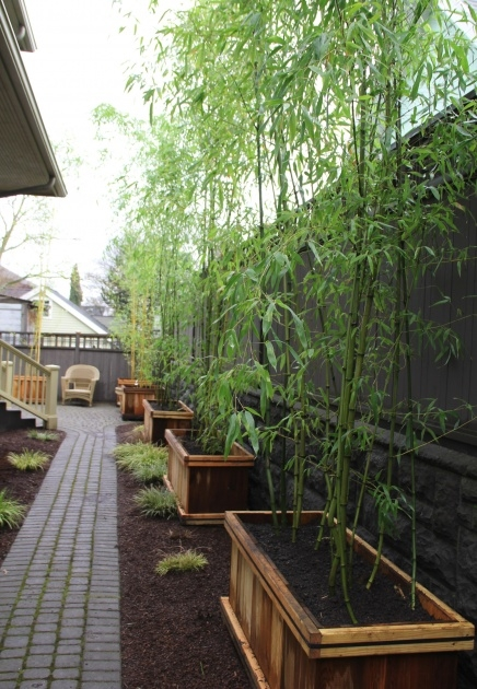 Best Bamboo Planter Box Picture