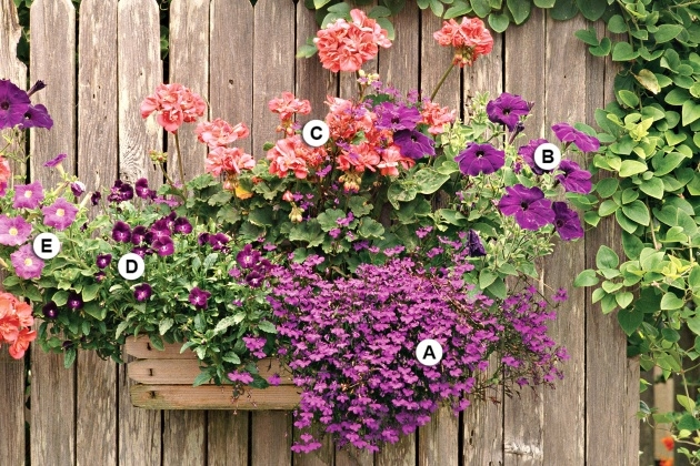 Best Best Flowers For Planters Photo