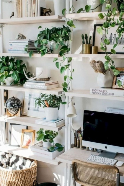 Best Cool Plants In Home Decor Picture