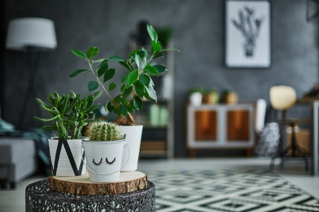 Best Houseplants That Cool Air Picture