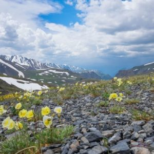 Images Of Tundra Plants