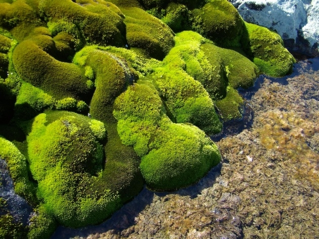 Best Moss Plant Picture