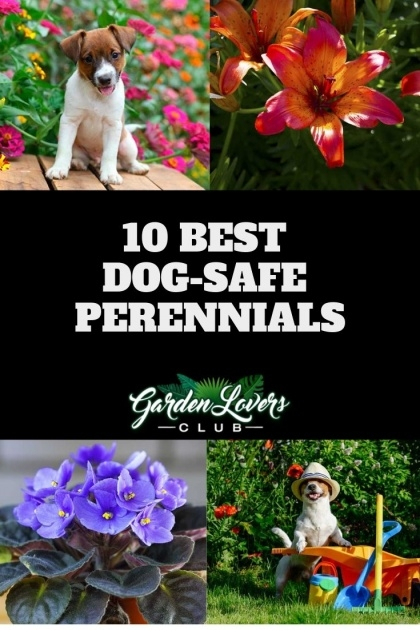 Best Outdoor Plants Healthy For Dogs Photo