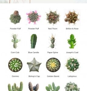 Plant Identification And Names