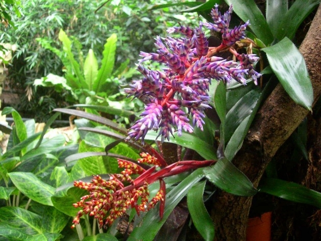 Best Plants Of Tropical Rainforests Picture