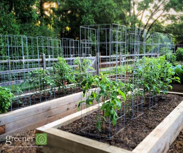 Best Tomato Cages Picture