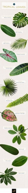 Best Tropical Types Of Plants Picture