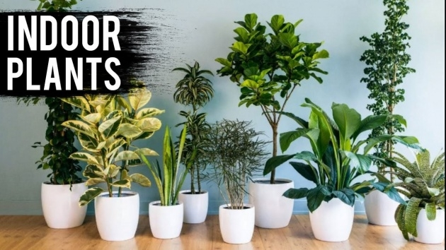 Cool Indoor Plant Ideas Picture