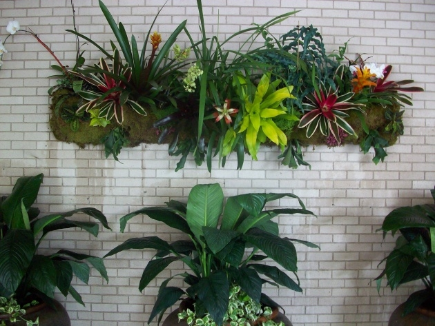Cool Orchid Wall Planter Image