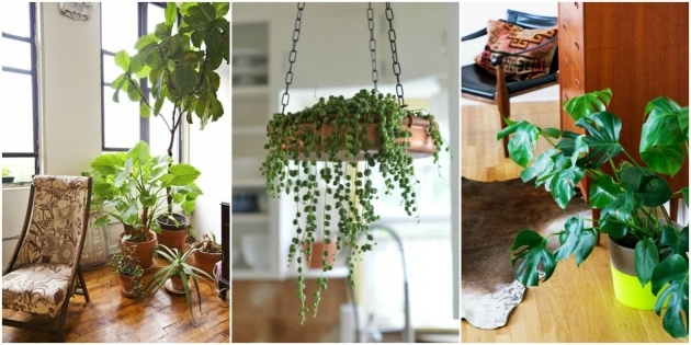 Cool Plants For Small Spaces Photo