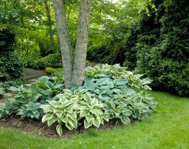 Cool Tree Ring Planter Ideas Picture