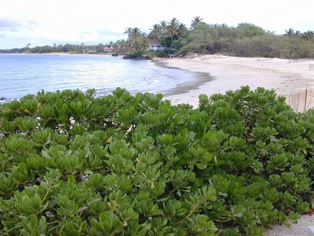 Cool Tropical Types Of Plants Image