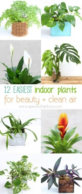 Creative Air Purifying Indoor Plants Image