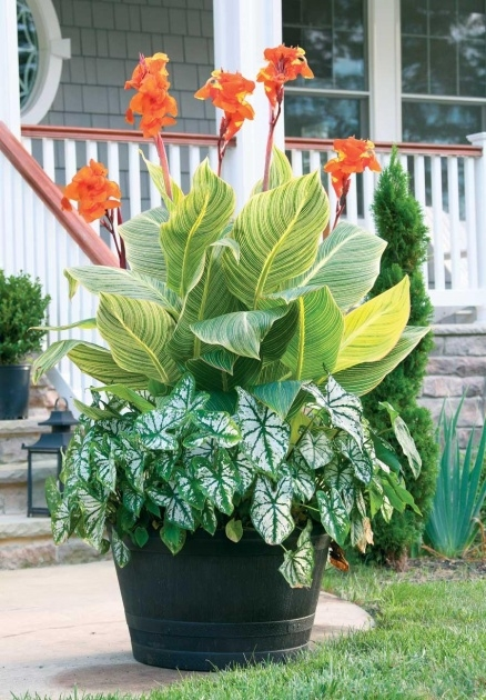 Creative Best Flowers For Planters Picture