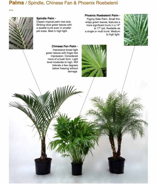 Creative Palm Houseplant Cant Support Itself Image