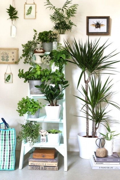 Creative Plant Design Ideas Photo
