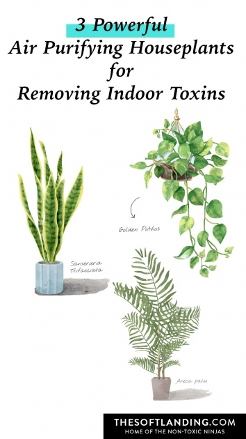 Creative Purifying Home Plants Picture