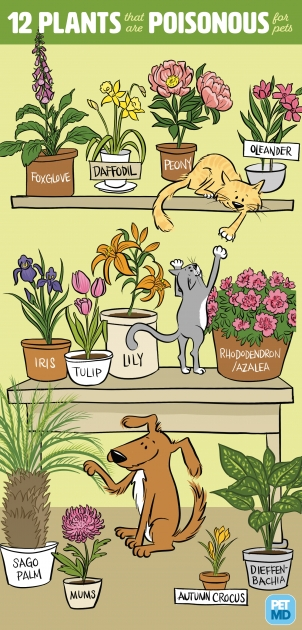 Creative Safe Flowers For The Garden With Cat Image
