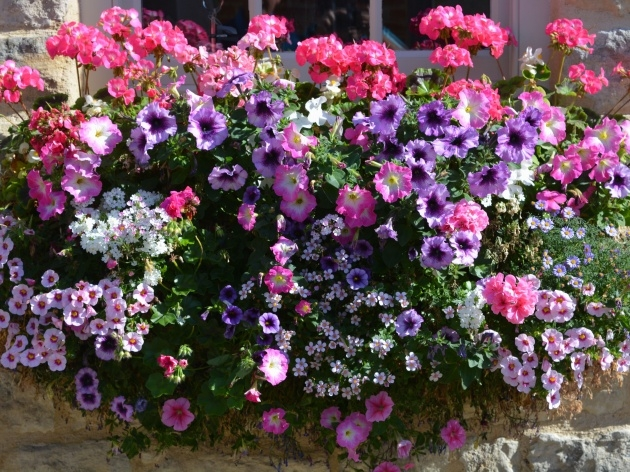 Easy Best Flowers For Planters Photo