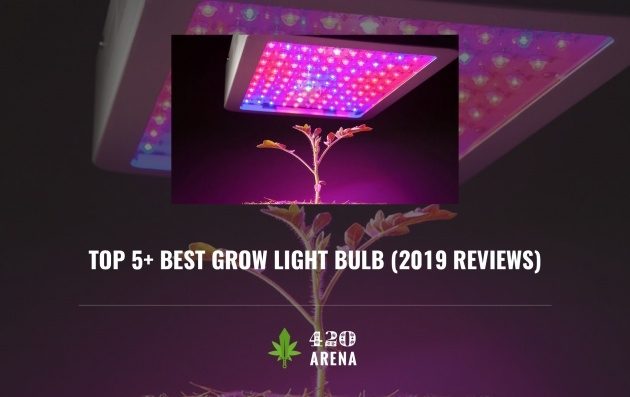 Easy Best Grow Light Bulbs Picture