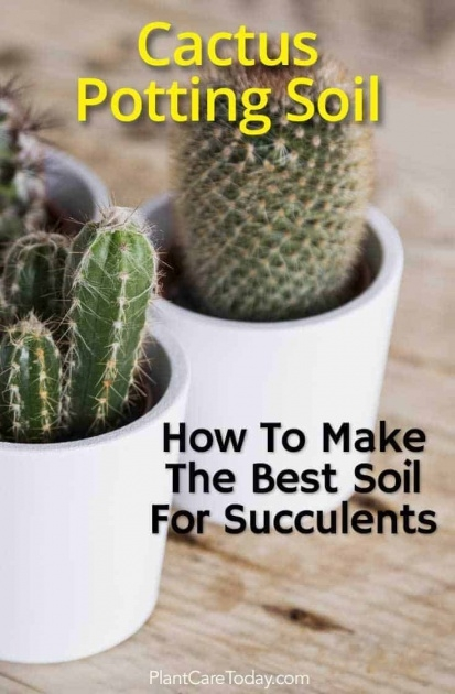 Easy Cactus That Dont Need Soil Image