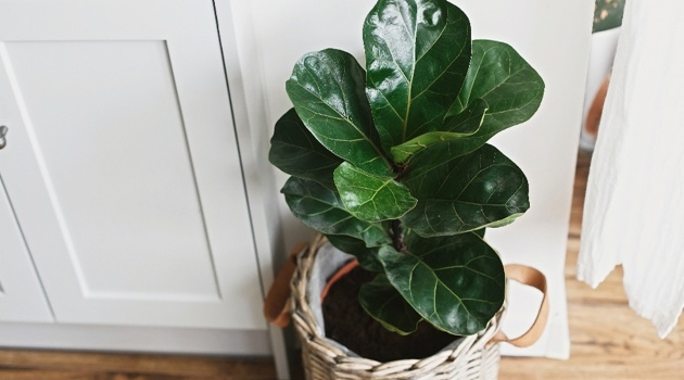 Easy Common House Plants Picture