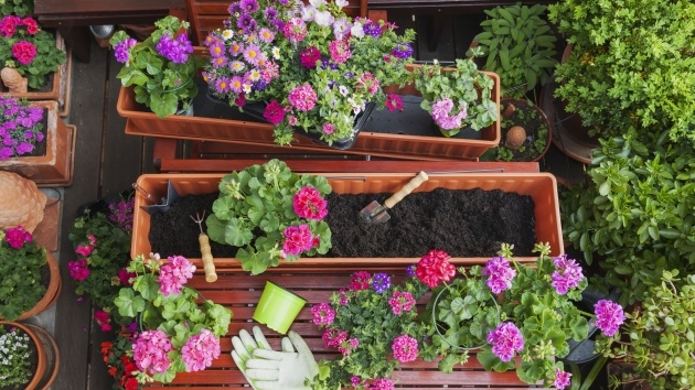 Easy Hanging Perennials Flowers For Containers Photo