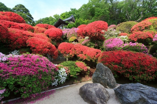 Easy Japanese Garden Plants Picture