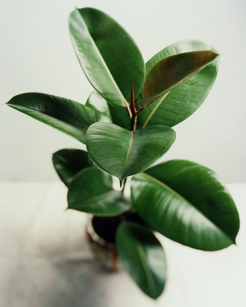 Easy Names Of House Plants With Pictures Image