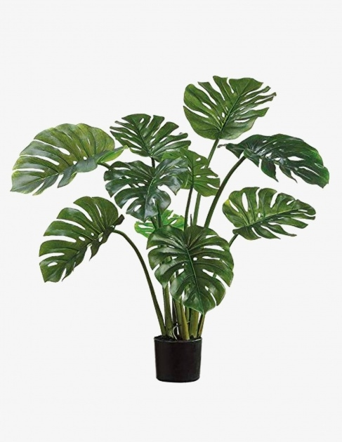 Easy Names Of House Plants With Pictures Picture