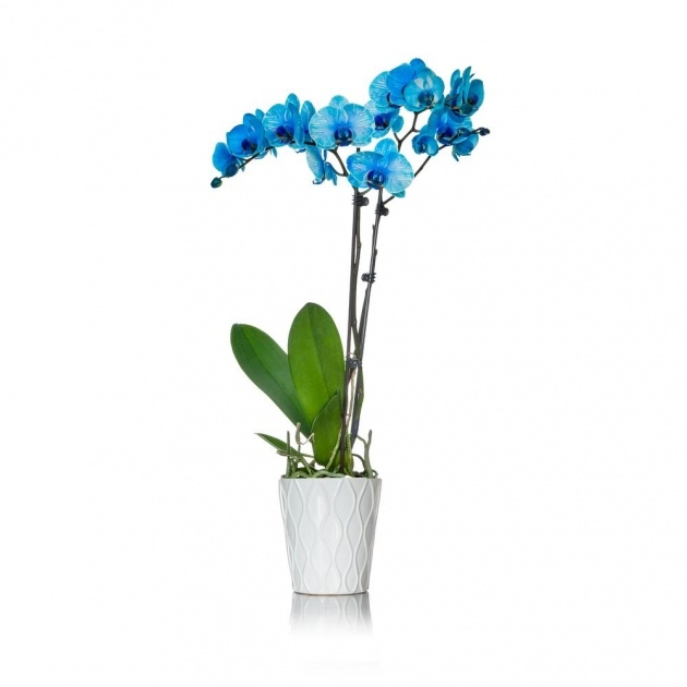 Easy Orchid Plant Pot Picture