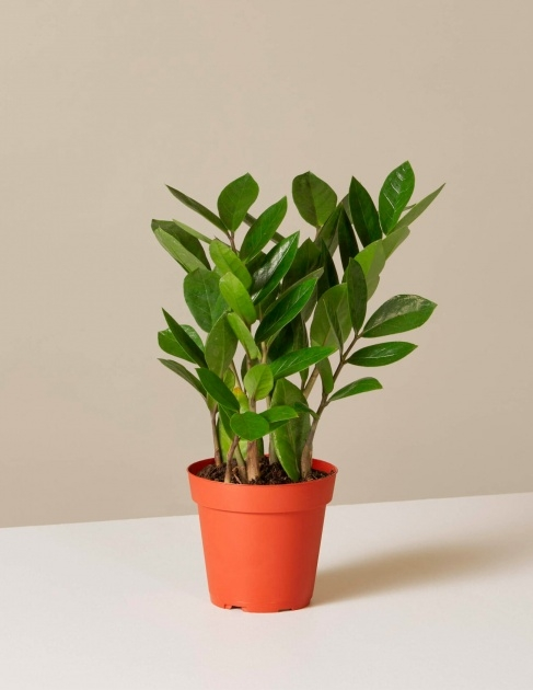 Easy Plant Plant Picture