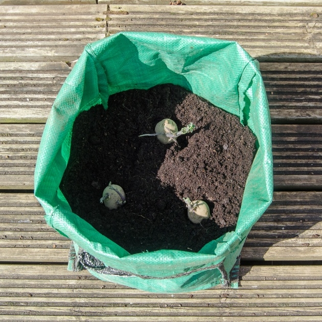 Easy Planting Potatoes In Bags Picture