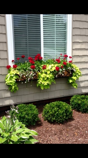 Easy Plants For Planter Boxes Image
