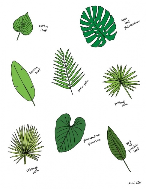 Easy Tropical Types Of Plants Image