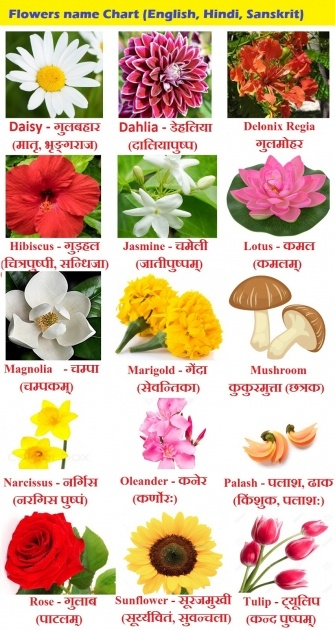 Fantastic Types Of Flowers In Hindi Image