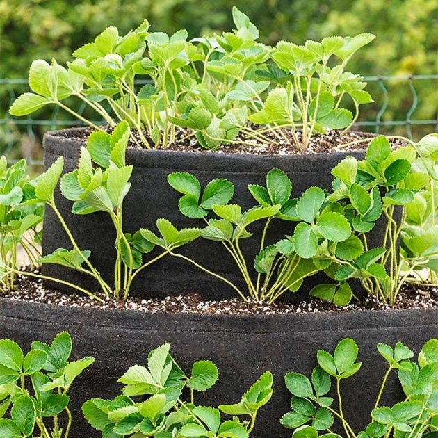Fascinating 3 Tier Strawberry Planter Picture