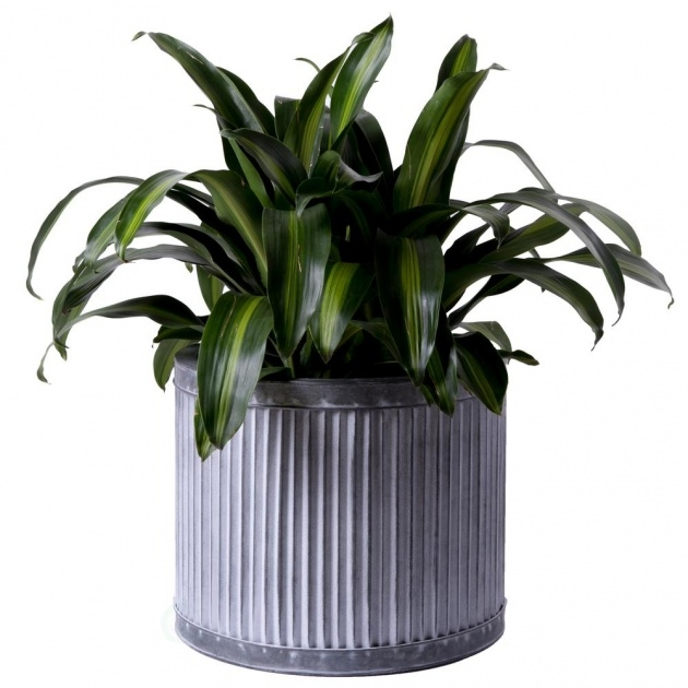 Fascinating Corrugated Metal Planters Picture