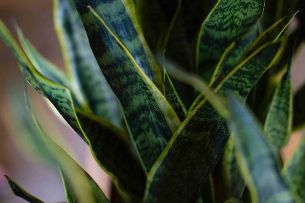 Fascinating Variegated House Plants Photos Picture