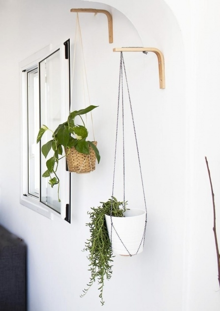 Fascinating Wall Plant Hangers Outdoor Image